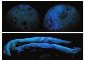 馒头也被染色了!最实用的食物染色鉴别法
