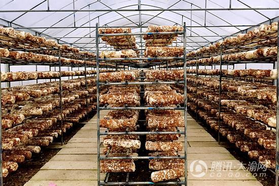 香菇也能生吃 存放不宜超1天