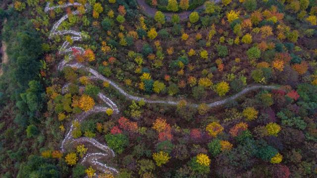 树叶做画,亲密动物 国庆主城近郊彩色森林耍事多