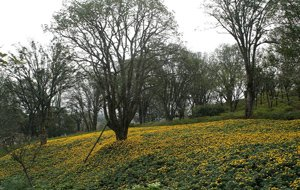 鸿恩寺公园实景