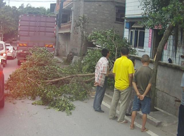 货车司机开车接电话 撞断路边绿树致道路堵塞