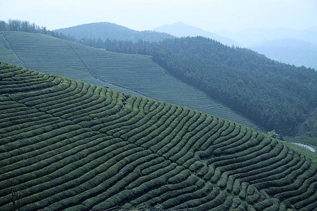 """""""私人订制""""正在改变贵州茶叶传统产销模式"""