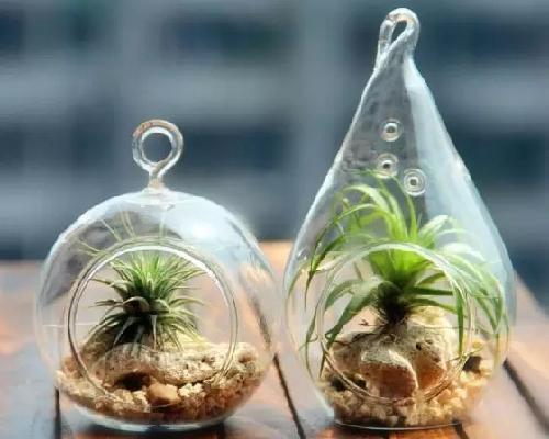 这些懒人植物 好看还好养!