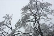 12月重庆到峨嵋山冰雪之地----高铁自助旅游攻略