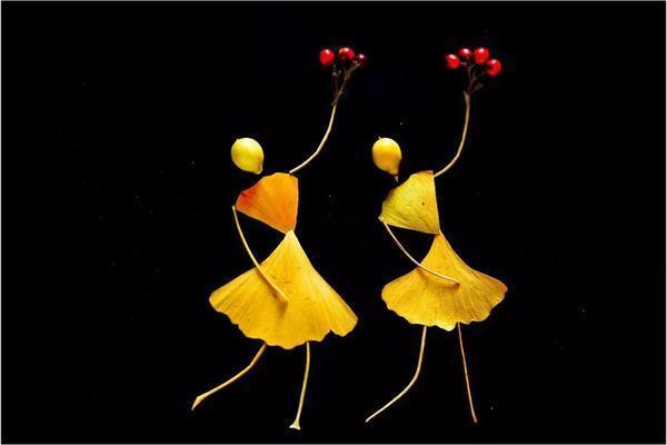 """漯河这位老师捡的树叶会""""跳舞""""网友:能当工艺品!"""