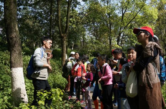 """带孩子体验森林观赏鸟类 看小䴙䴘演绎""""水上漂"""""""