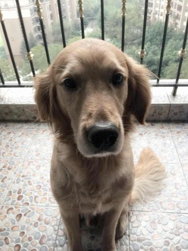 据重庆小动物保护协会的志愿者焦女士介绍,每年一入冬,他们就会收到