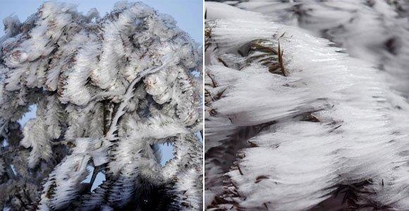 重庆现冰凌景观 植物成冰雕