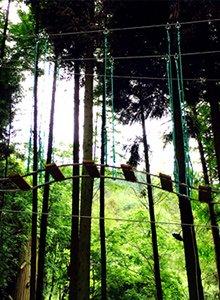 飞越丛林落户武陵山