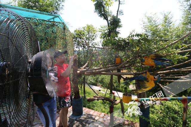永川这个动物园的动物们都这样过暑假
