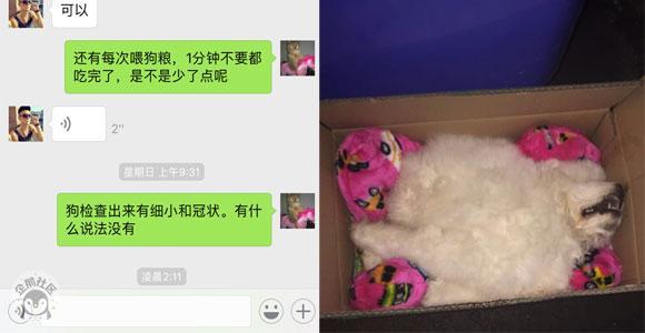 """网友曝料:南坪无良商家售卖""""星期狗"""""""