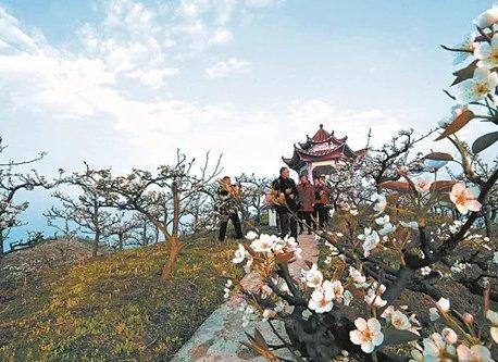 周末来踏青赏花 5大景区7条游玩路线
