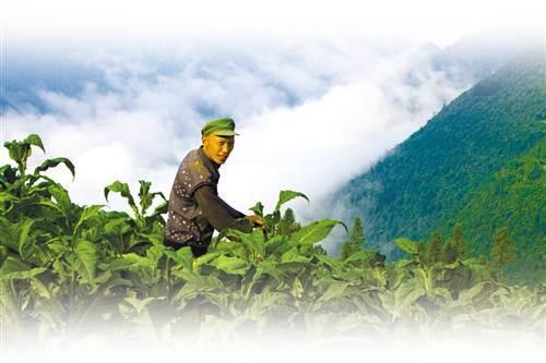 丰都:构建长效机制 持续巩固脱贫成果