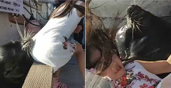 疑似中国女孩被海狮叼下水 家长曾提醒:小心咬你