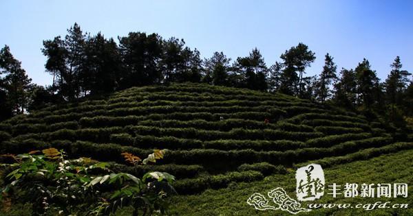 丰都:青龙乡瓦屋山 神秘绝美生态旅游地