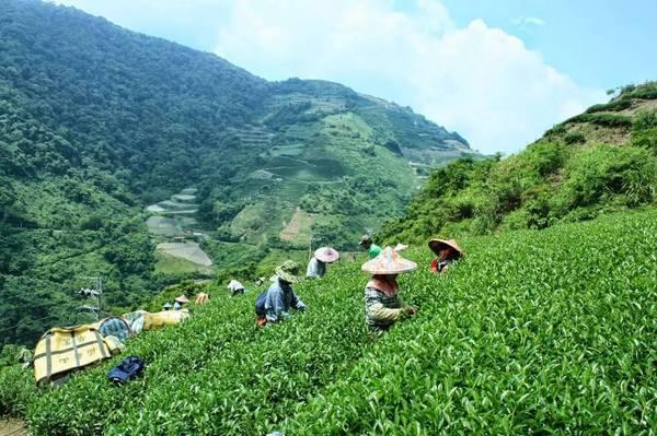 除了珍珠奶茶  台湾还有什么好喝的?