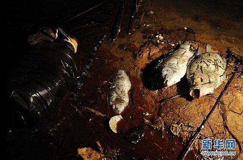 受损4亿 谁来为紫金矿业污染事故买单?