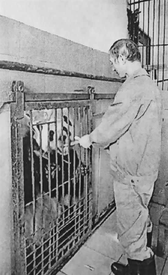 保育员照顾熊猫38年将退休:还会带孙子来看熊猫