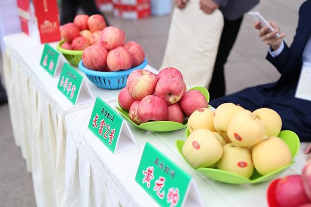 """走进重庆 """"白水苹果""""的""""甜蜜相渝"""""""