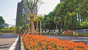 大渡口区:聚力提升城市品质