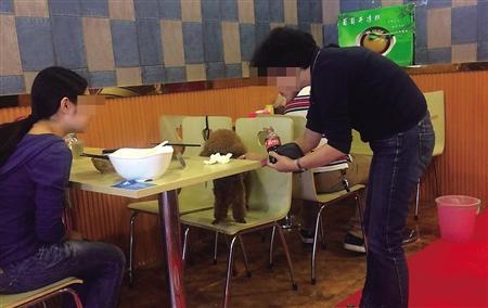 母女餐馆吃饭与宠物狗共用碗筷
