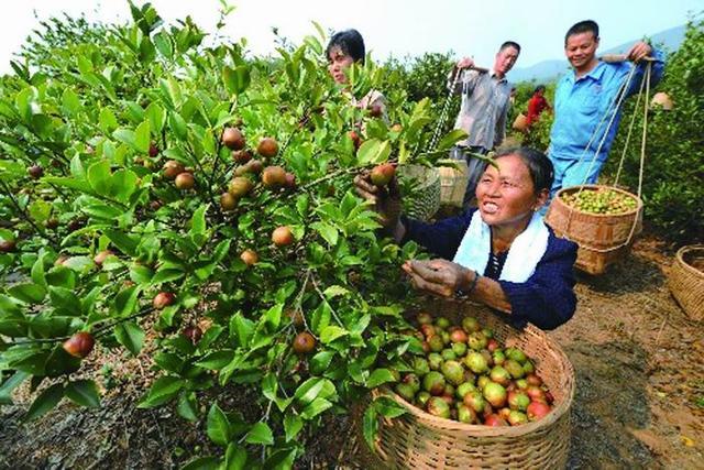 """涪陵首届茶花文化节 一起去看""""天王刘德华""""吧"""