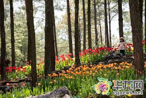 记者 王思洋摄-涪陵大木花谷景区演绎 花生活 引爆旅游新体验