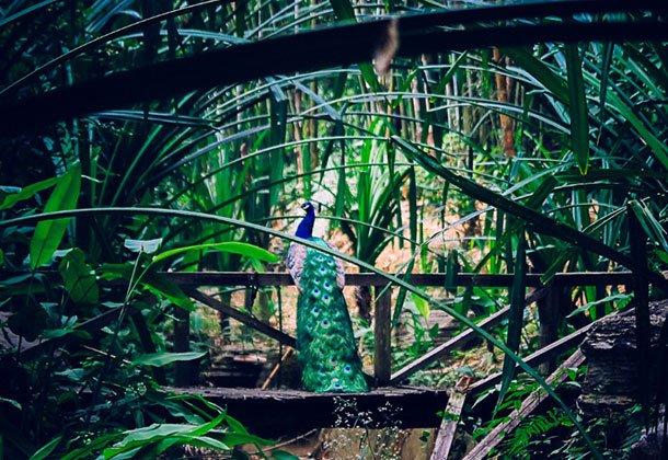 云南芒市游勐巴娜西珍奇园 看傣族过新年