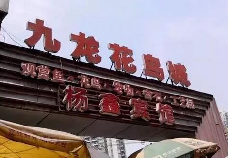 重庆的花鸟市场在哪里?不知道的赶紧来看