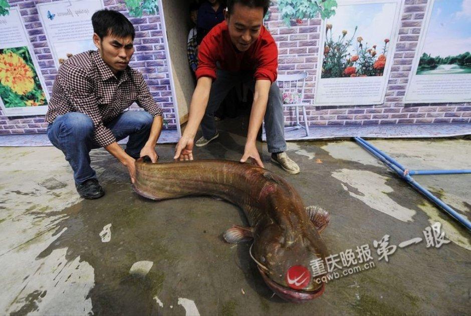 腾讯大渝网 视觉周刊 无码重庆第十六期