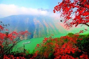 第五届巫山国际红叶节26日开幕 下旬可赏红叶图片