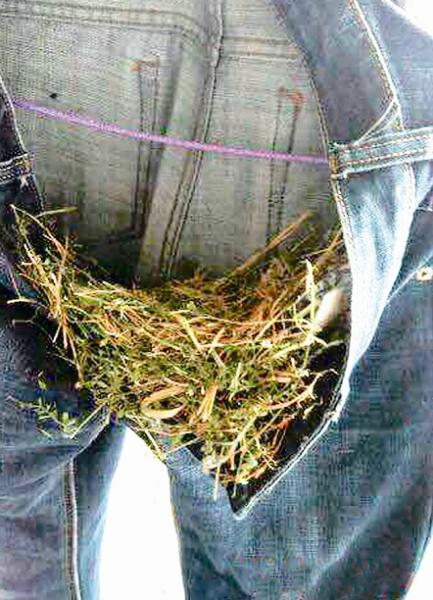 大学生阳台晾牛仔裤被鸟筑巢下蛋(图)