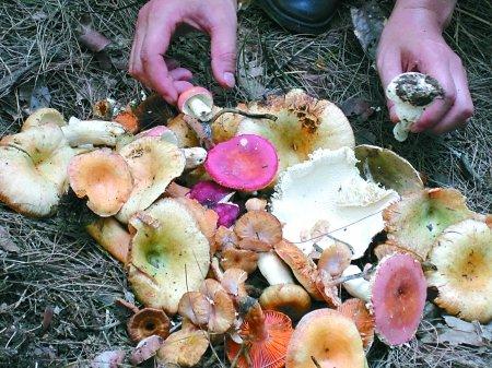 市食药监发布预警:全市餐饮单位禁用野生蘑菇