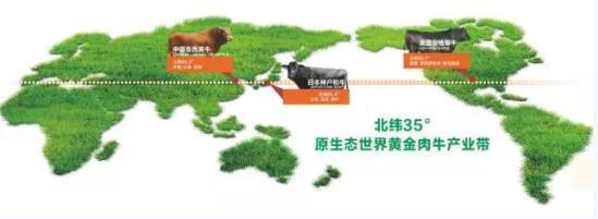 """日本出和牛韩国有韩牛 """"牛头""""许尚忠让他打造中国版鲁牛!"""