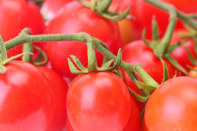 """""""基因魔剪""""剪出美味番茄"""