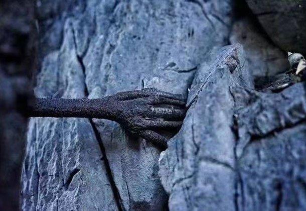 """冬季游香格里拉巴拉格宗 竟看到3000年菩提长出""""佛手"""""""