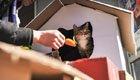 小伙用纸盒为猫搭别墅