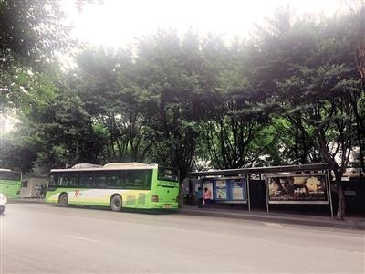 354路公交车在站台下客后,再往前开几十米甚至上百米,才能找到高清图片
