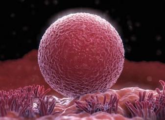 性福课堂:女人一生能排多少卵子