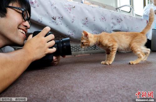 一位爱猫人士拿着相机替小猫拍照,小猫则好奇地盯着镜头