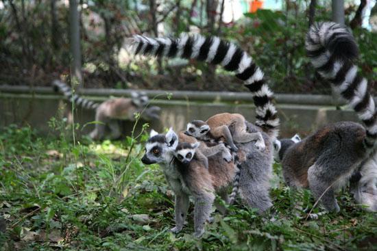 动物:大熊猫,金丝猴,金毛羚牛,朱鹮等,还有来自国外的长颈鹿