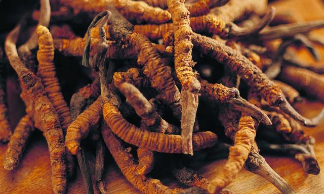 冬虫夏草整体产业低迷 保护与研究应双管齐下
