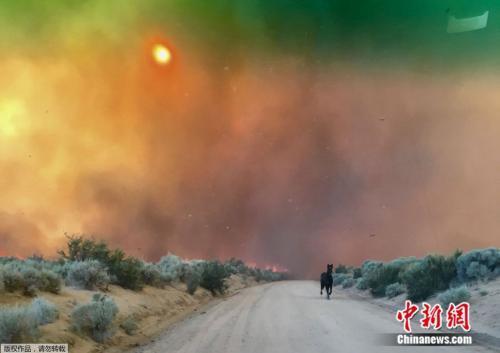 美国加州长谷遭野火侵袭,浓烟蔽日,树林里的动物四处窜逃。