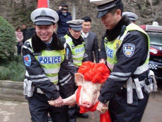 企业送年猪慰问交巡警