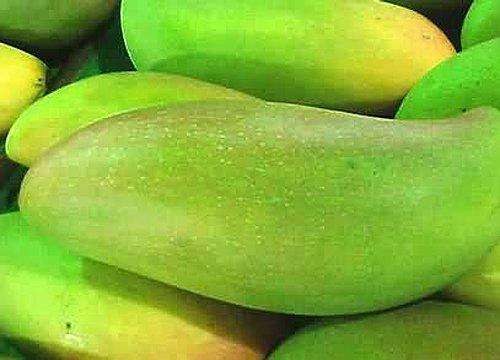 瓜 果实 蔬菜 水果 植物 种子 500_360