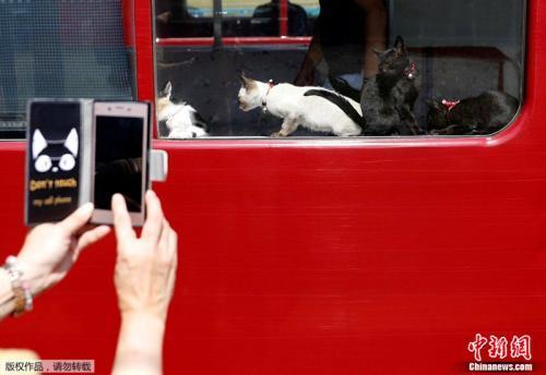爱猫人士用手机拍下猫咪自由搭火车的罕见画面