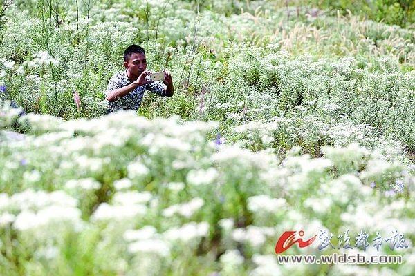 黔江:伍佛岭5000亩山花开 游客纷纷来赏花