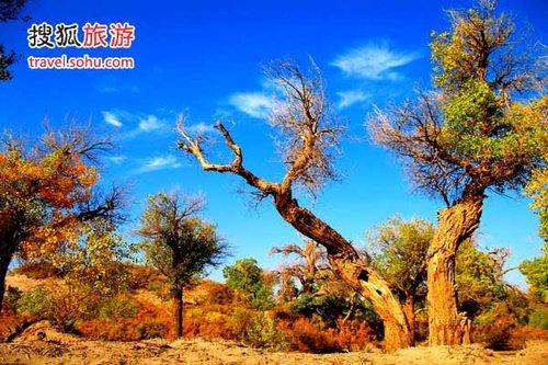 额济纳拥有我国境内最粗最老的胡杨树