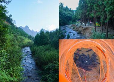 这里有山有水有森林 登山耍水露营钓鱼都得行