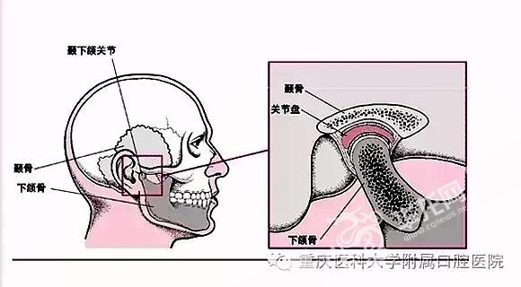 关节结构解剖图